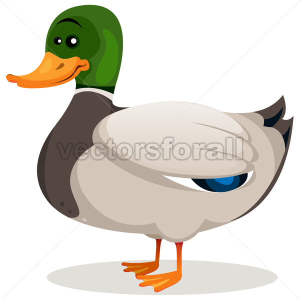 Cartoon Mallard Duck - Vectorsforall