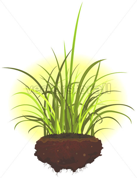 Grass Leaves And Roots - Benchart's Shop