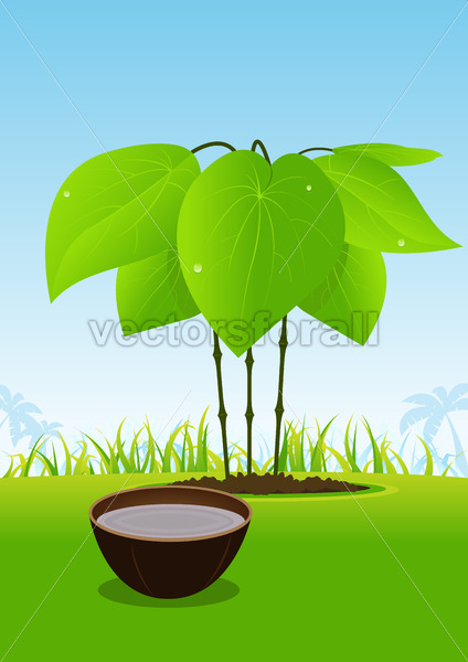 Kava Plant And Its Juice Served In Wood Bowl - Vectorsforall