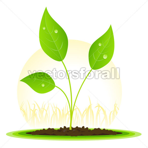 Plant Seed Growth - Vectorsforall