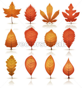 Autumn Leaves Set - Vectorsforall
