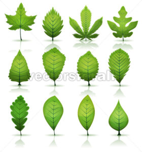 Green Leaves Set - Vectorsforall