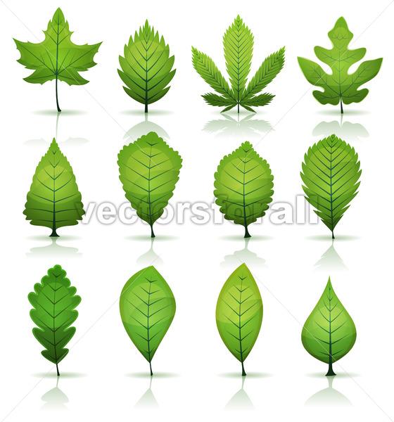 Green Leaves Set - Vectorsforall