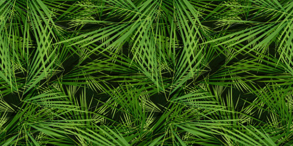 Seamless Palm Trees Leaves Background - Vectorsforall