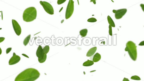 Spring Leaves On White Background - Vectorsforall