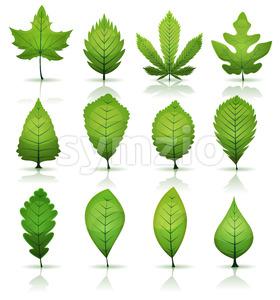 Green Leaves Set Stock Vector