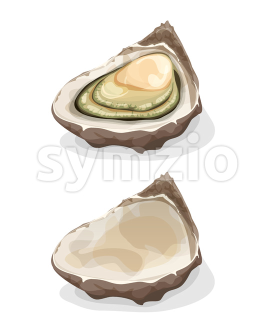 Illustration of a cartoon appetizing fresh and raw oyster shell, full and empty