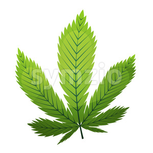 Cannabis Leaf Stock Vector