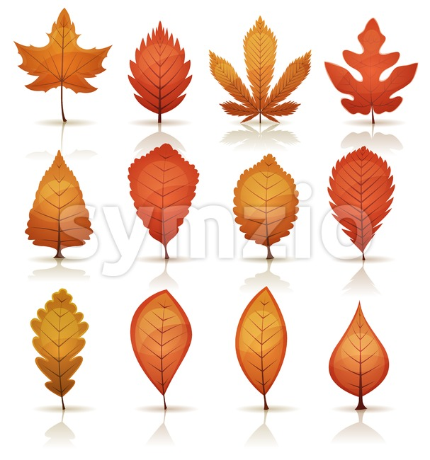 Autumn Leaves Set Stock Vector