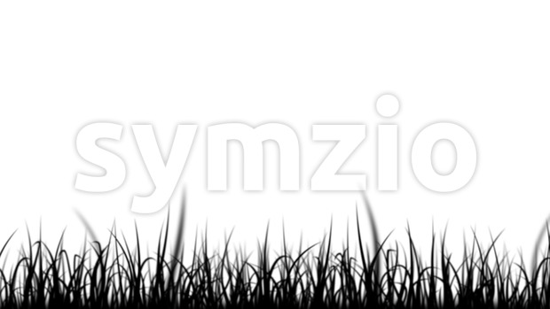 4k animation of a loop of elegant blades of grass patterns moving in the wind isolated on white background