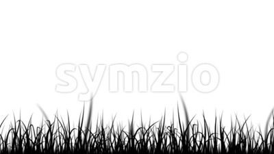 Black And White Grass Leaves Isolated Silhouette Loop Stock Video