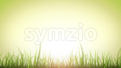 Grass Leaves On Beautiful Sky Background Loop Stock Video