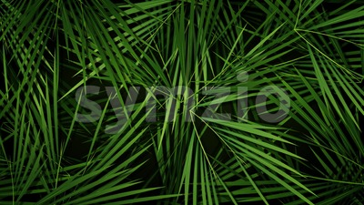 Summer Palm Trees Leaves Background Loop Stock Video