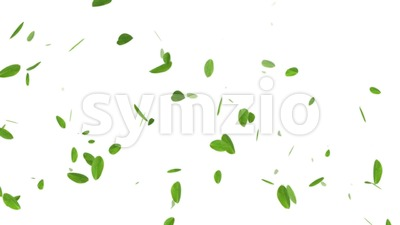 Spring Leaves On White Background Stock Video
